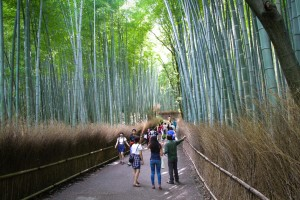 Bamboo Grove at Arashiyama near Kyoto Japan