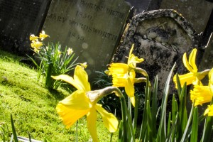 Daffodils at Wordsworth's Grave in Grasmere