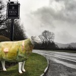 One of the Lakes GoHerdwick sheep